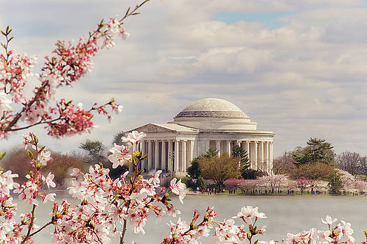 Cherry blossom and Jefferson by Rima Biswas