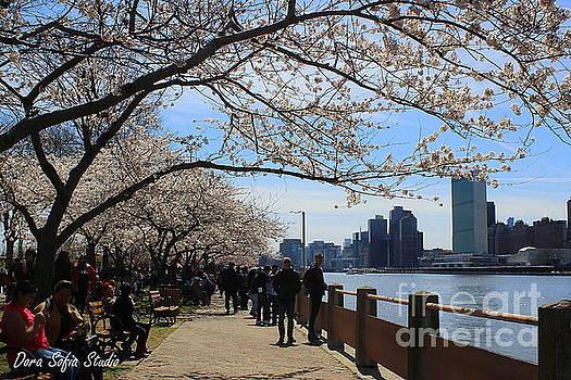 Cherry Blossom Festival - New York City by Dora Sofia Caputo Photographic Design and Fine Art