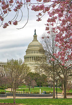 Juergen Roth - Cherry Blossom Framing the United States Capitol