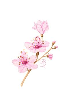 Cherry Blossom by Monica Burnette