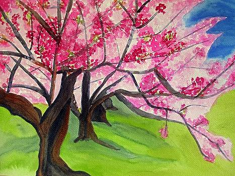 Cherry Blossom Sakura by Sacha Grossel