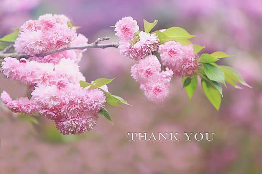 Cherry Blossom Thank You by Kay Kochenderfer