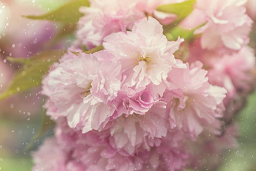 Cherry Blossom Time by June Marie Sobrito