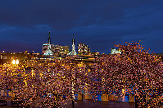 Cherry Blossom Trees at Portland Waterfront during Blue Hour by David Gn