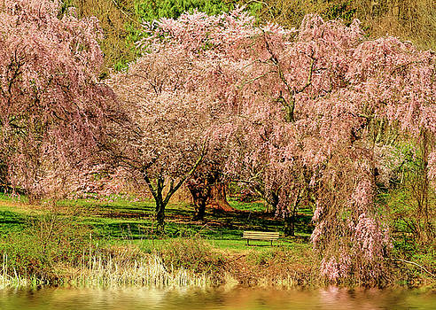 Cherry Blossoms And Lake by Geraldine Scull