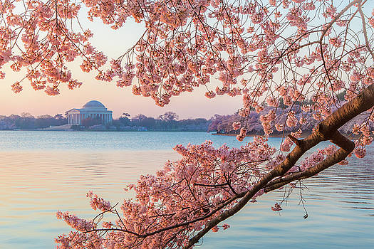 Cherry Blossoms at Sunrise by Ryan McKee