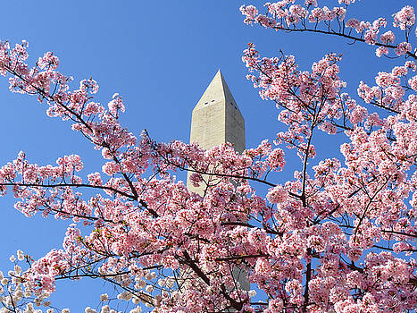 Cherry Blossoms at the Monument by Christopher Spicer