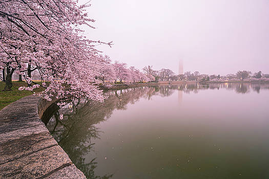 Cherry Blossoms in Fog by Michael Donahue