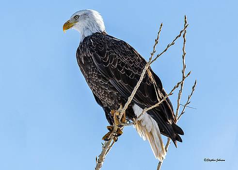 Cherry Creek State Park Bald Eagle by Stephen Johnson