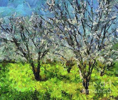 Cherry Orchard by Dragica Micki Fortuna