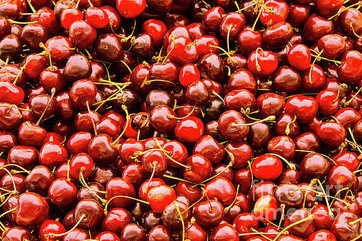 Bob Phillips - Cherry Season