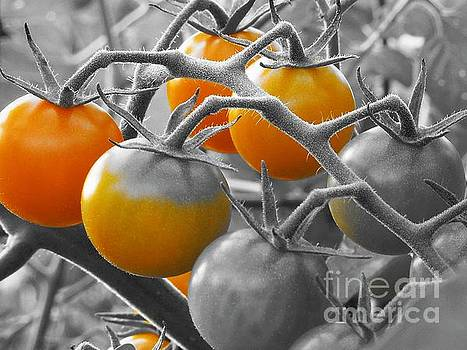 Cherry Tomatoes by Chad and Stacey Hall