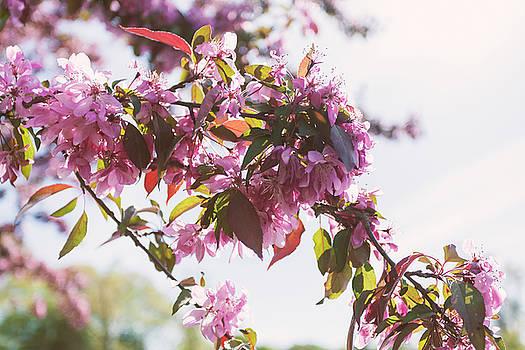 Lorrie Joaus - Cherry Tree Flowers