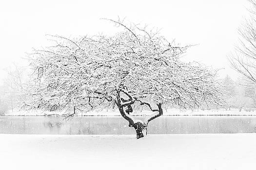 Lorrie Joaus - Cherry tree