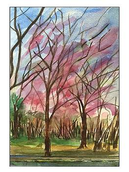 Cherry Trees Springtime by Angela Puglisi