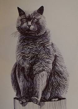 Chesire Cat by Kellie Hogben