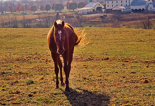 Chestnut Loping, Sweet Light, Bascule Farm, Poolesville, Maryland, Autumn, 2001 by James Oppenheim