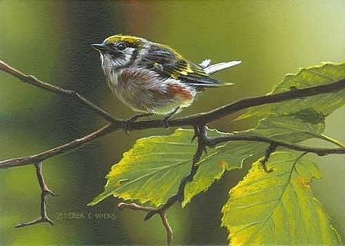 Chestnut sided Warbler by Derek Wicks