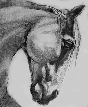 Cheval Horse Classic Graphite Charcoal Drawing by Michele Carter