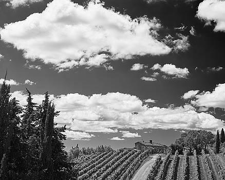 Chianti Vineyards by Richard Goodrich