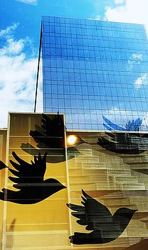 Chicago Birds by Todd Sherlock