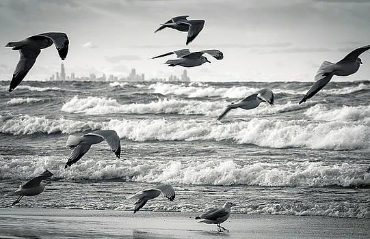 Chicago Framed in Flight by Jackie Novak