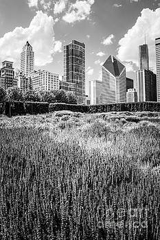 Paul Velgos - Chicago Skyline Lurie Garden Black and White Photo
