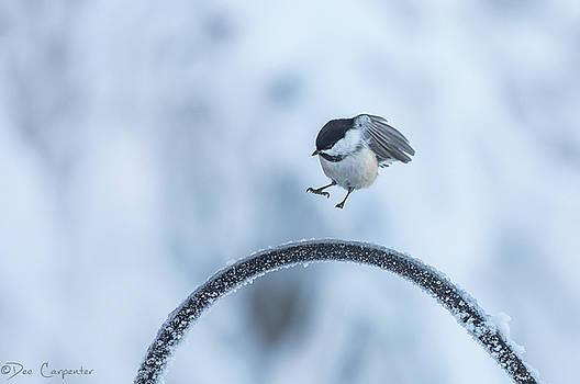 Chickadee Hop by Dee Carpenter