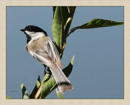 Chickadee Perched by Gretchen Wrede