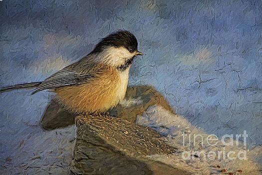 Deborah Benoit - Chickadee Winter Perch