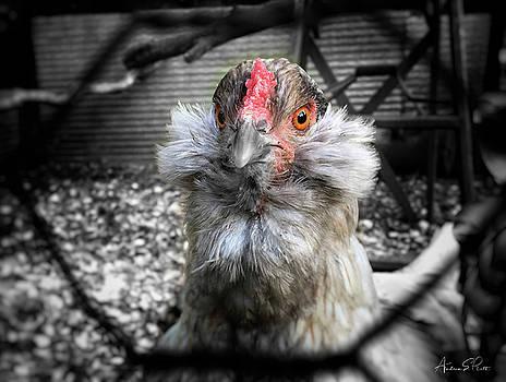 Chicken Coop Glare by Andrea Platt