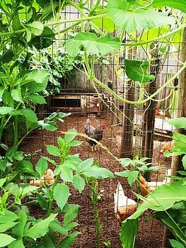 Chicken Coop I by Anna Villarreal Garbis