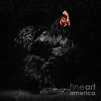 Chicken Painting by Edward Fielding