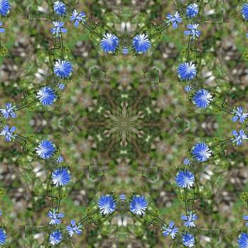 Valerie Kirkwood - Chicory Kaleidoscope