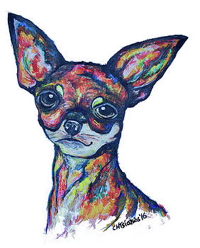 Chihuahua by Carol Tsiatsios