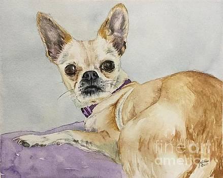Chihuahua by Gretchen Bjornson