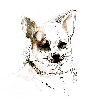 Chihuahua on Watercolor by Belette Le Pink