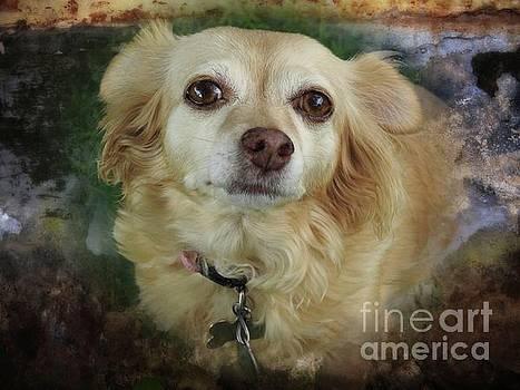 Chihuahua Portrait by Ella Kaye Dickey