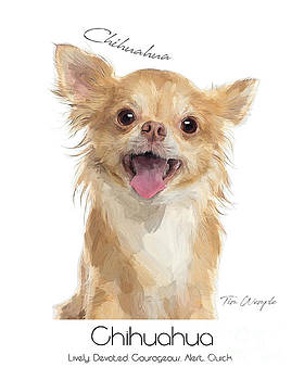 Chihuahua Poster by Tim Wemple