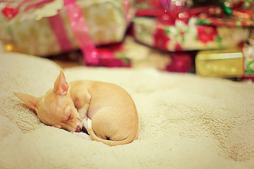 Chihuahua Puppy Christmas Dreams by Susan Gary