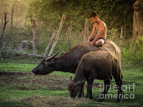 Child riding buffalo in countryside Thailand. by Tosporn Preede