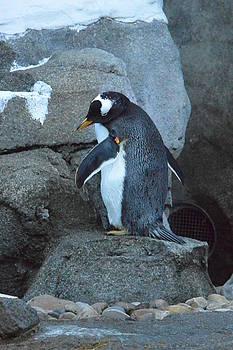 Chillaxing Penguin by Nicki Bennett
