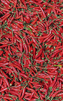 Chilli by James Wasdell