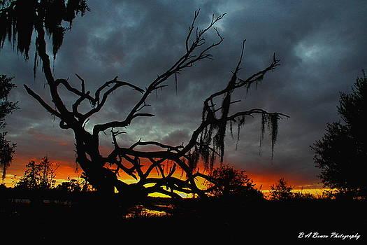 Barbara Bowen - Chilling Sunset