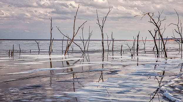 Chilly Reflection by Crystal Socha