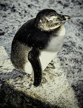 ChillyPenguin by Chris Boulton