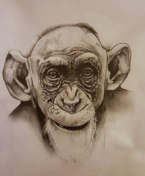 Chimp by Gilca Rivera