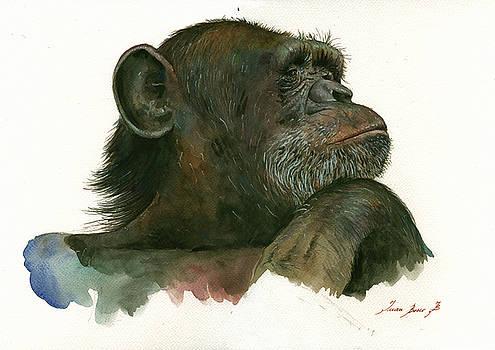 Juan Bosco - Chimp portrait