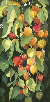Chinese Lanterns by Anne Havard
