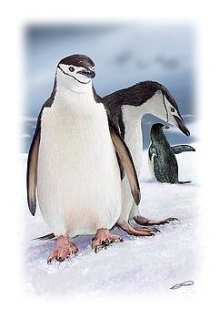 Chinstrap Penguins 2 by Owen Bell